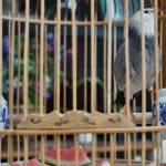 chinese bird in a cage