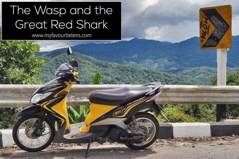 The Wasp and the Great Red Shark | a travel photography blog from My Favourite Lens