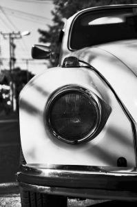 black and white beetle