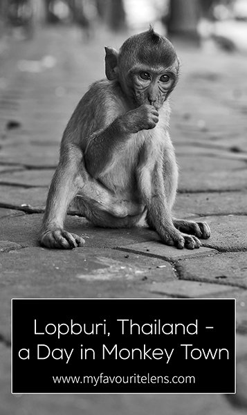 A small town in Thailand overrun by monkeys, Lopburi is a travel photographer's dream. In monochrome, these are my pictures from one day in Monkey Town. Come take a look.