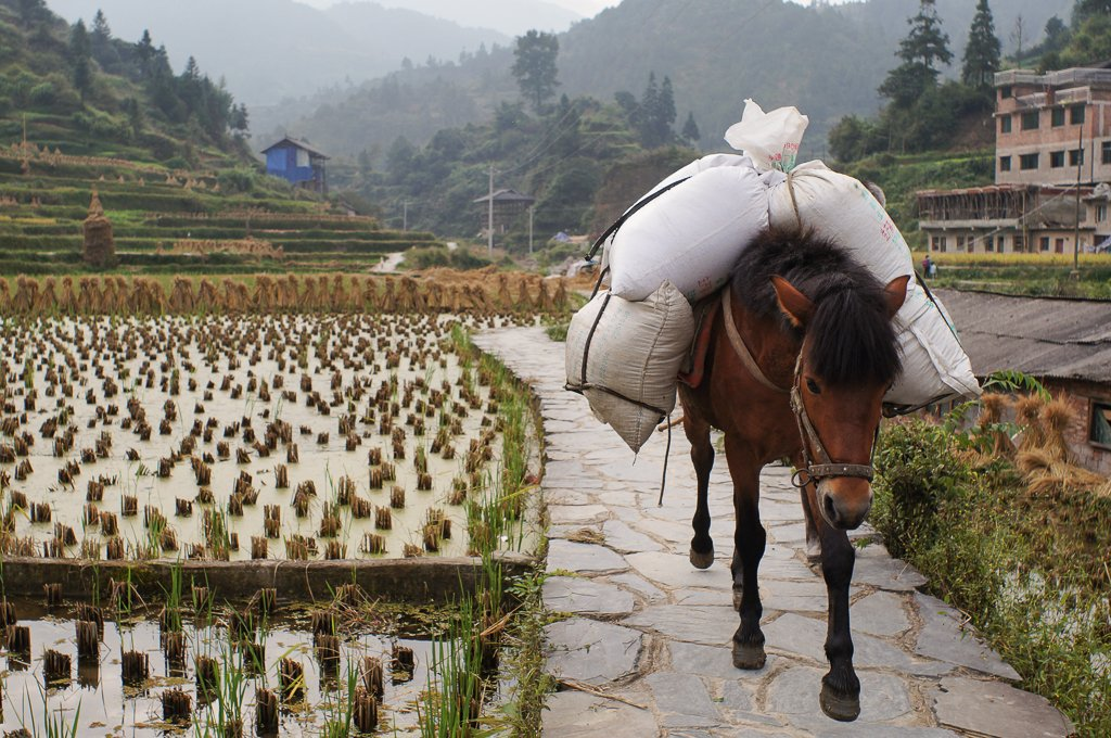 china rural village horse