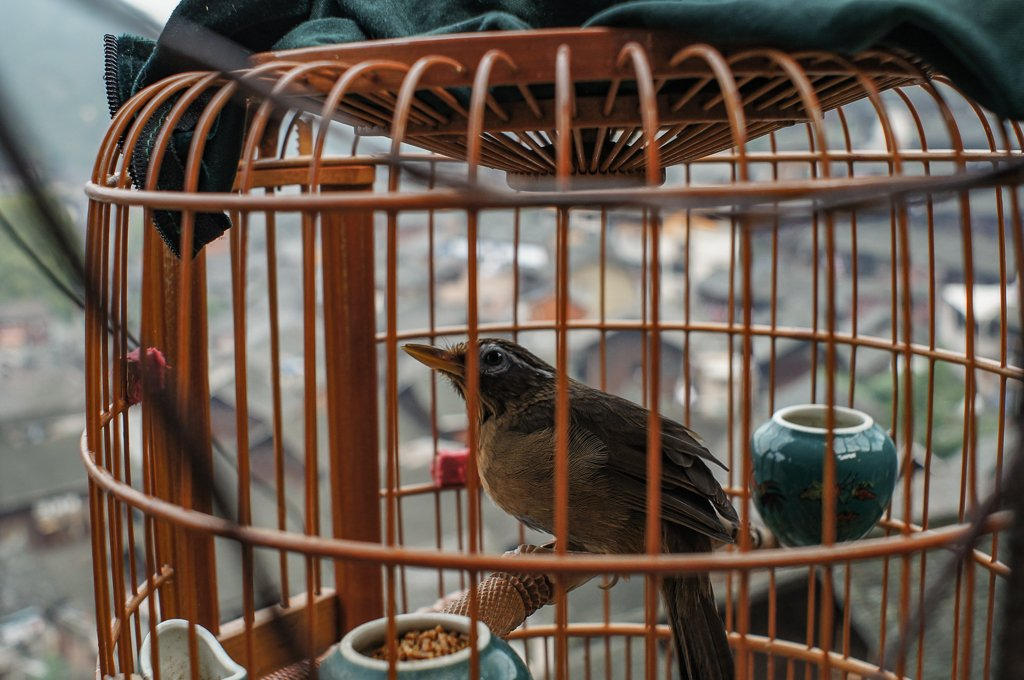 china village caged bird
