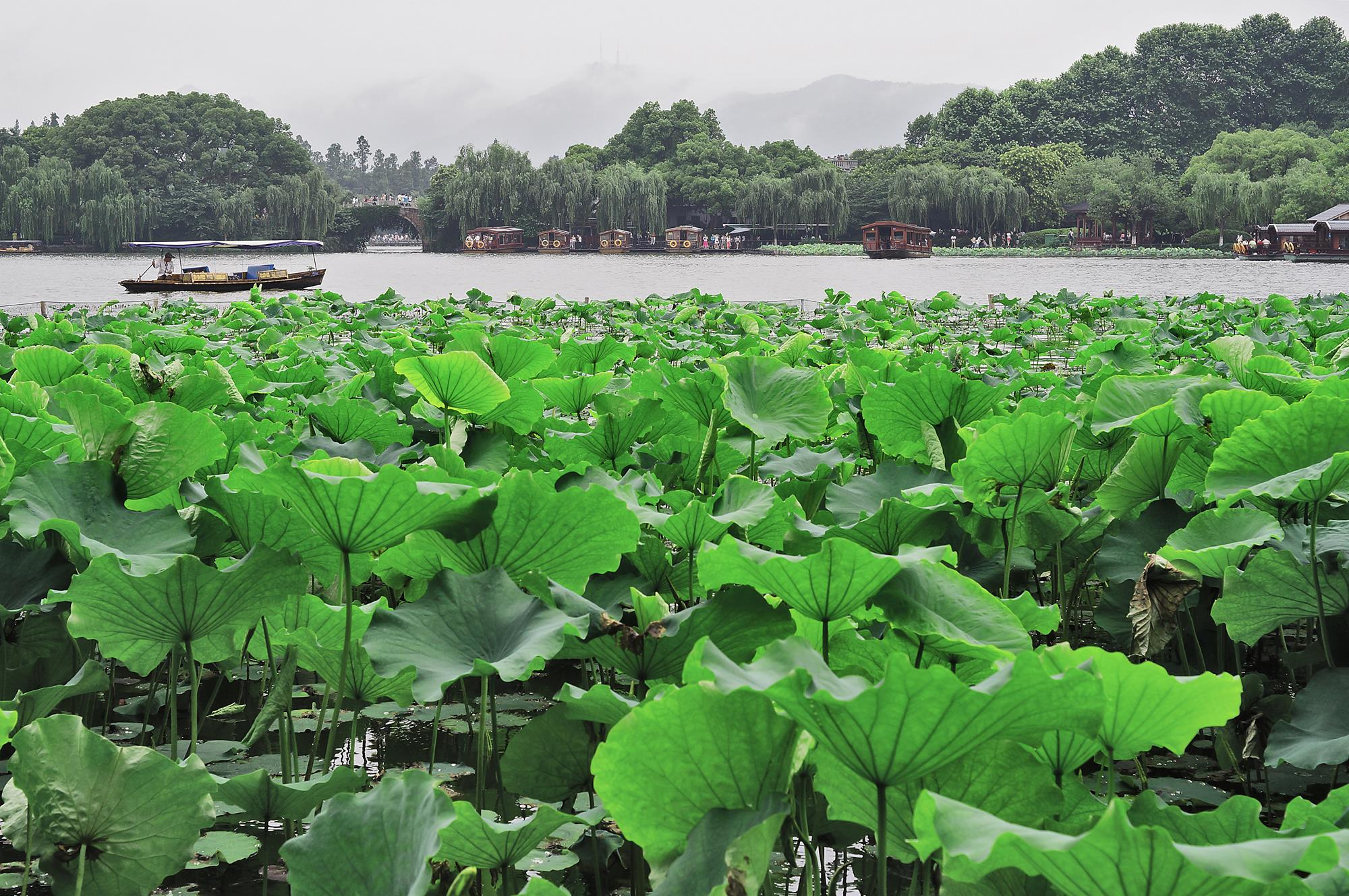 scenery at hangzhou west lake