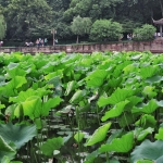 plants in hangzhou west lake