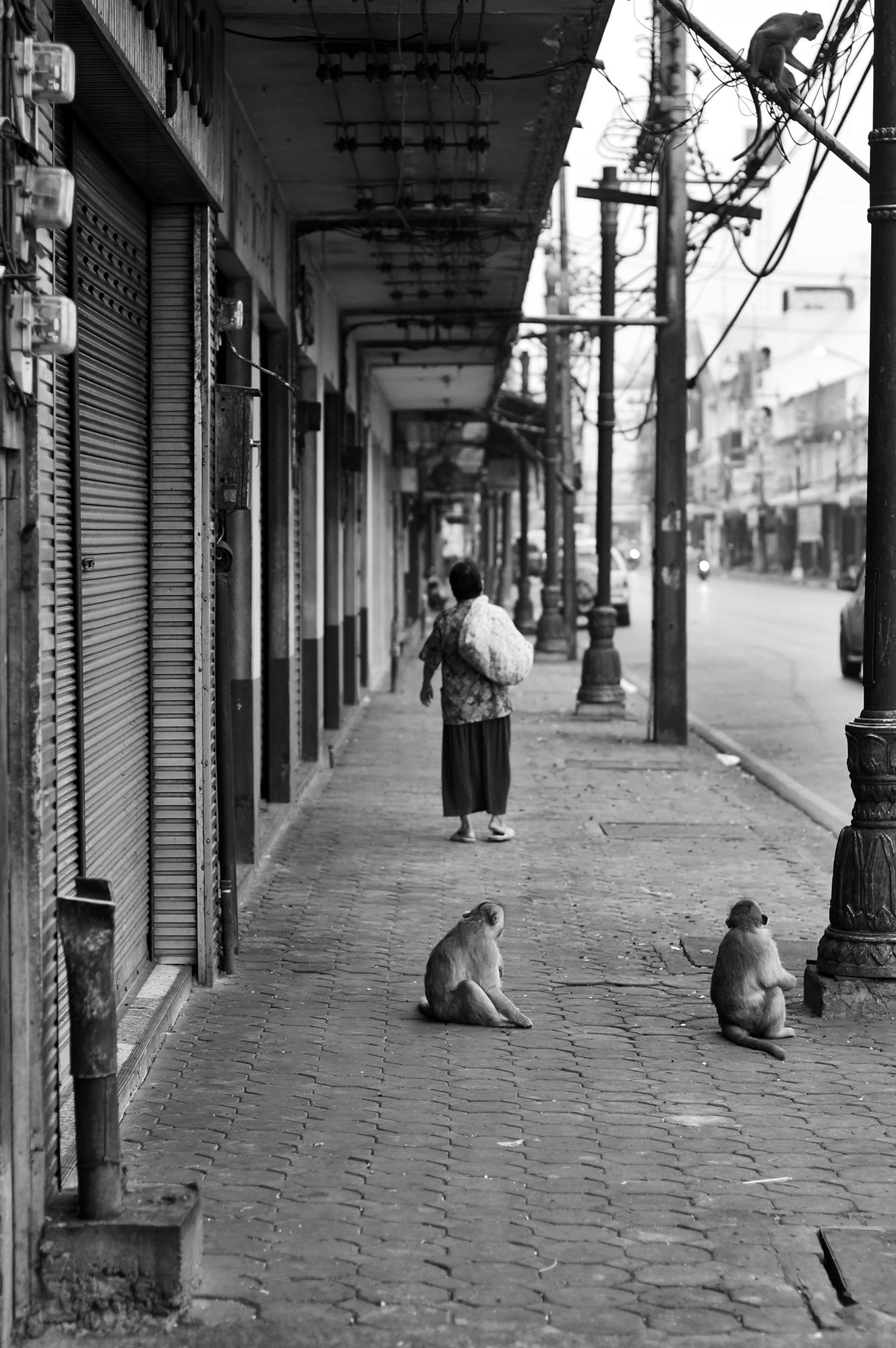 lopburi monkeys woman