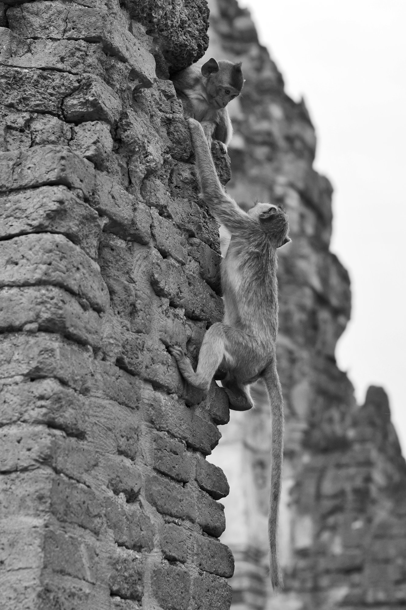 thailand lopburi temple monkeys