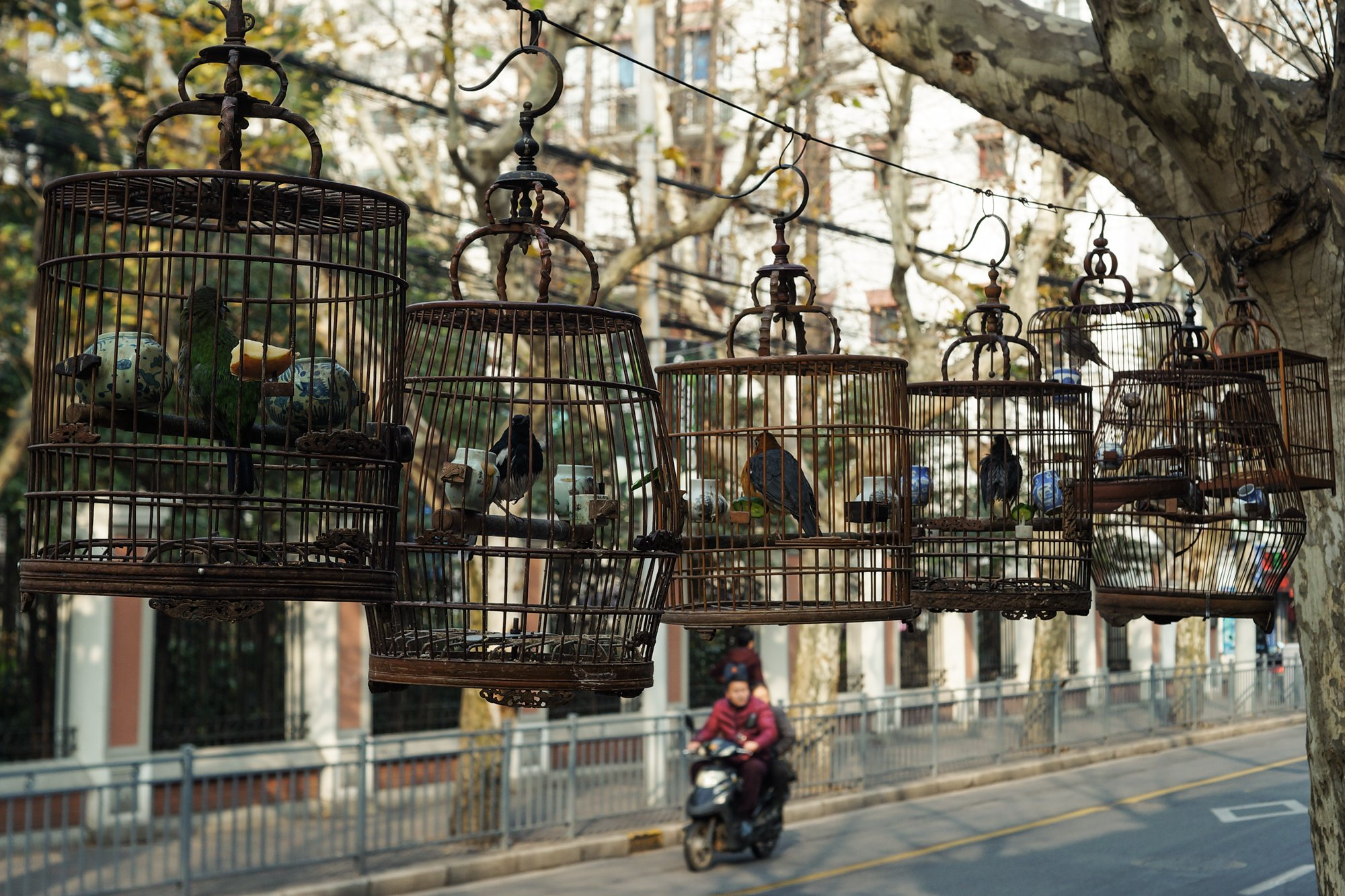 china bird cages