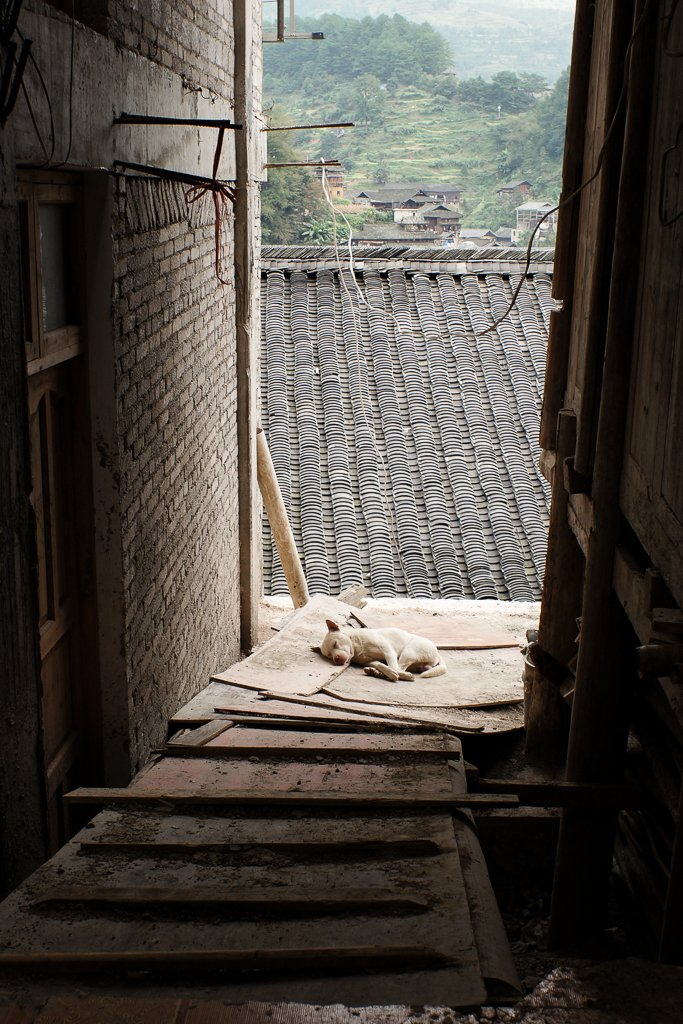 china rural village dog
