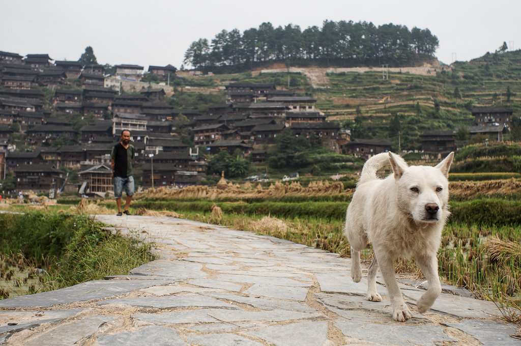 chinese rural village dog