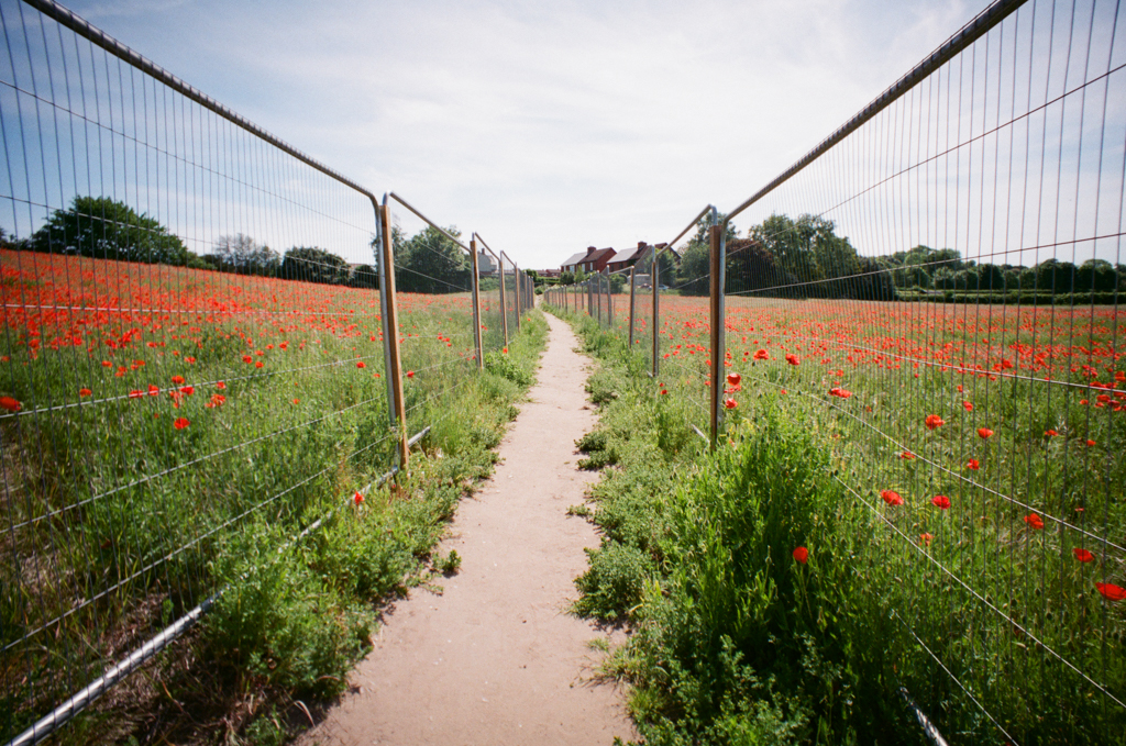 blidworth meadows poppies